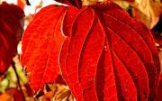 Podzimní detoxikace omlazuje tělo i mysl
